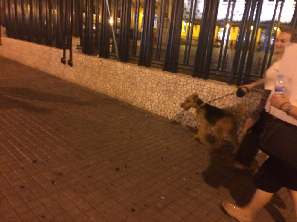 Airedale outside the Bull Ring and Train Station just moments later.